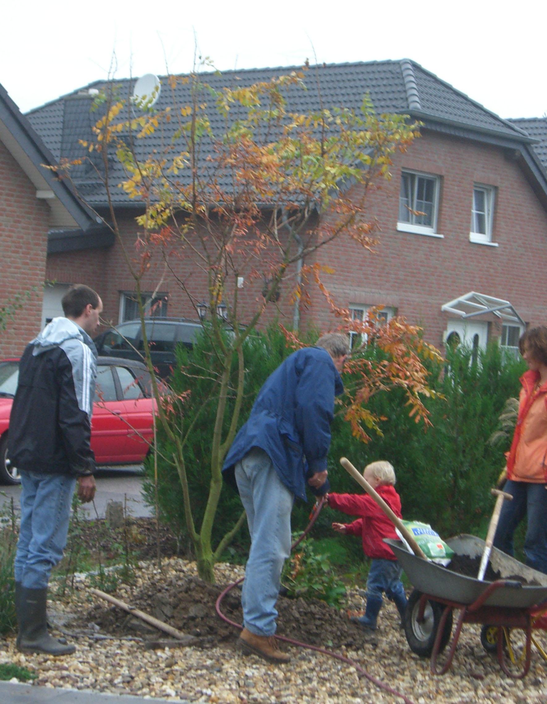Garten und landschaftsplanung brigitta oetken pflanzen for Pflanzen lieferservice